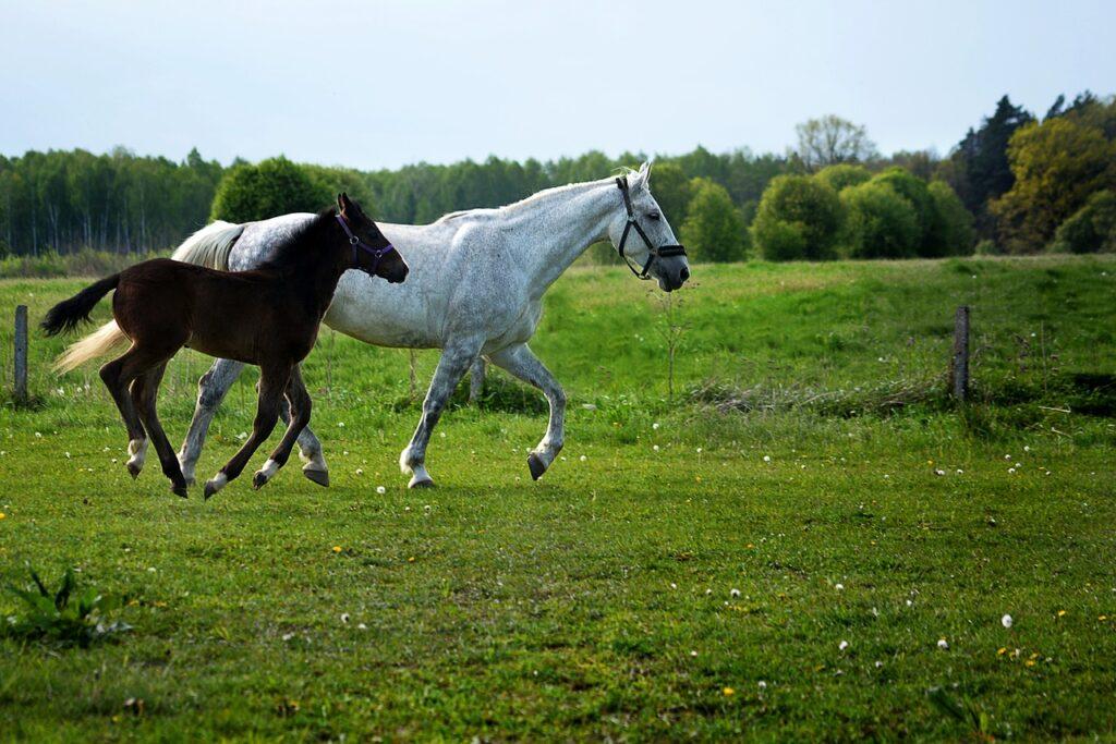 male or female horse