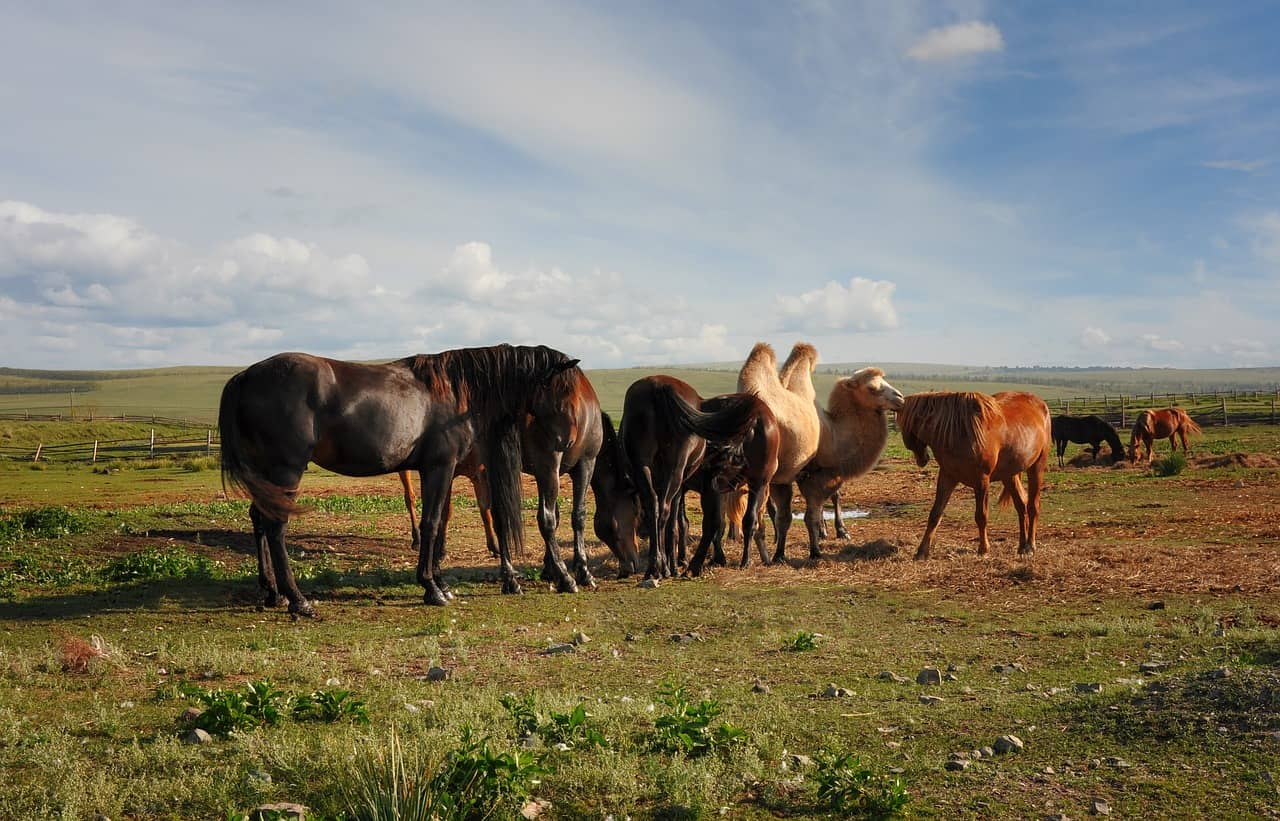 Are Horses Afraid, Stronger, Faster, or Hate Camels?