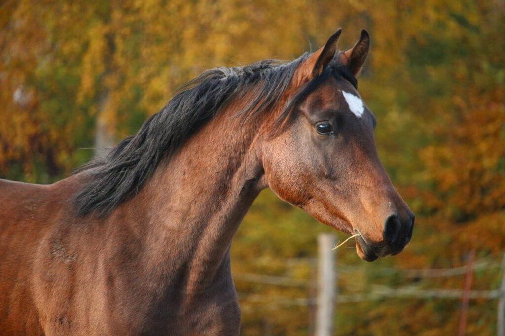 thoroughbreds horse