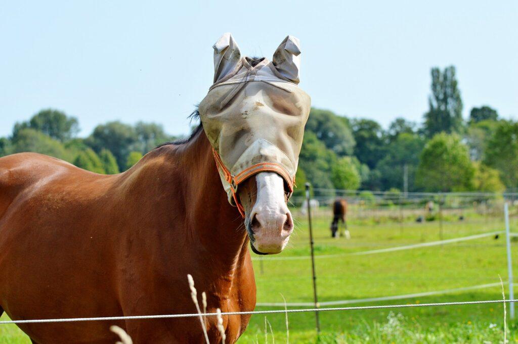 horse-eyes-cover