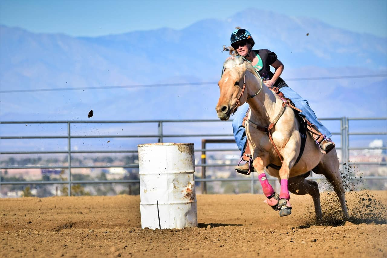 Are Quarter Horses Good For Barrel Racing? Definitely! Here's Why