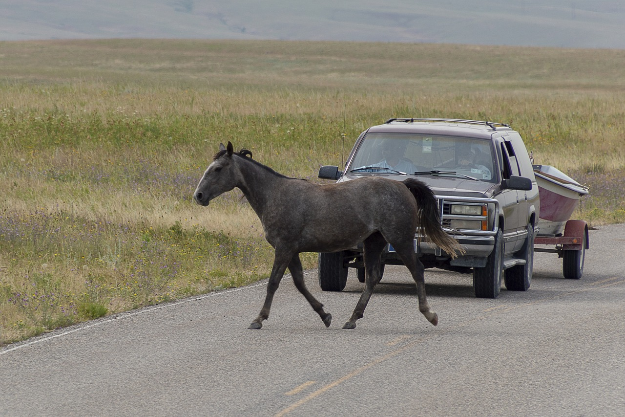Can Horse Outrun A Car, Bicycles, Motorcycles, or Train?