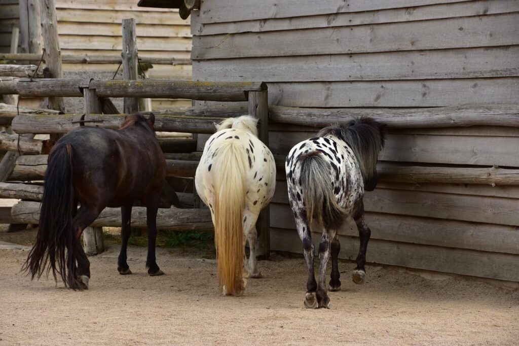 horses-tails