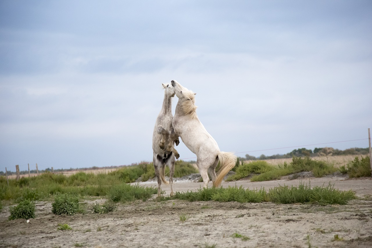 Are Horses Stronger than Bulls, Donkeys, Mules, Camel (& Others)