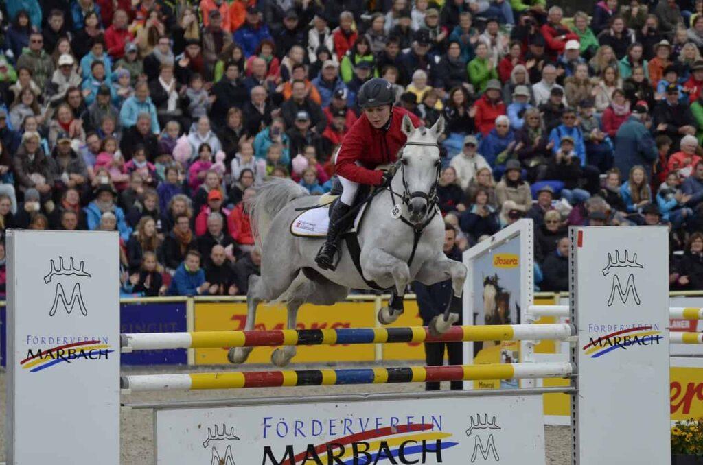 arabian-horses-jump