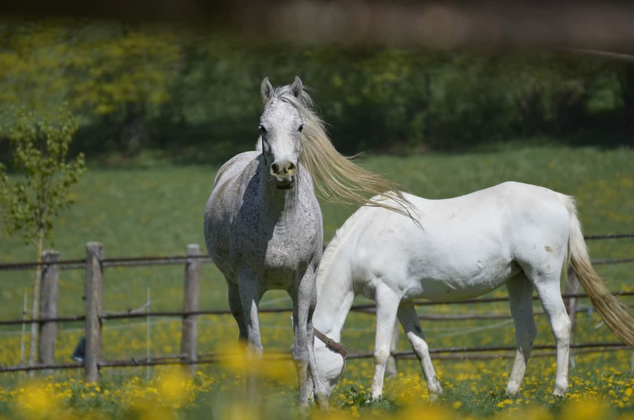 Horse and Fear: What Are Horses Scared of? (Explained for Beginners)