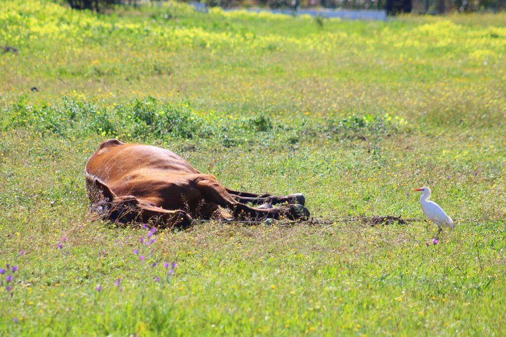 horses-get-tired