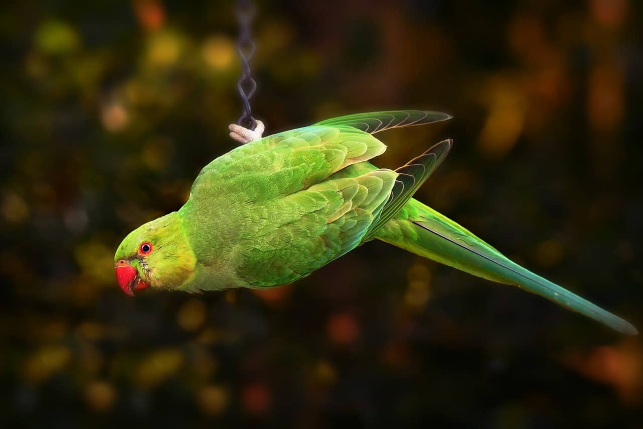Can Parakeets Eat Crackers, Almonds, Peanuts, Oatmeal? (and More!)
