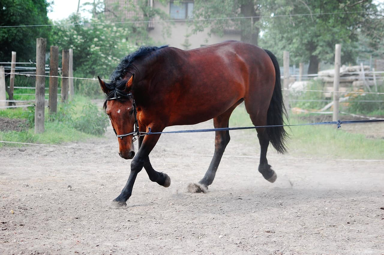 Do Horse Attack? 16 Important Answers To Know!