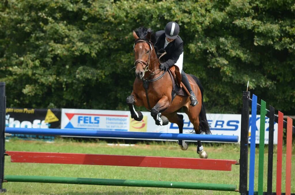 show-jumping-horses