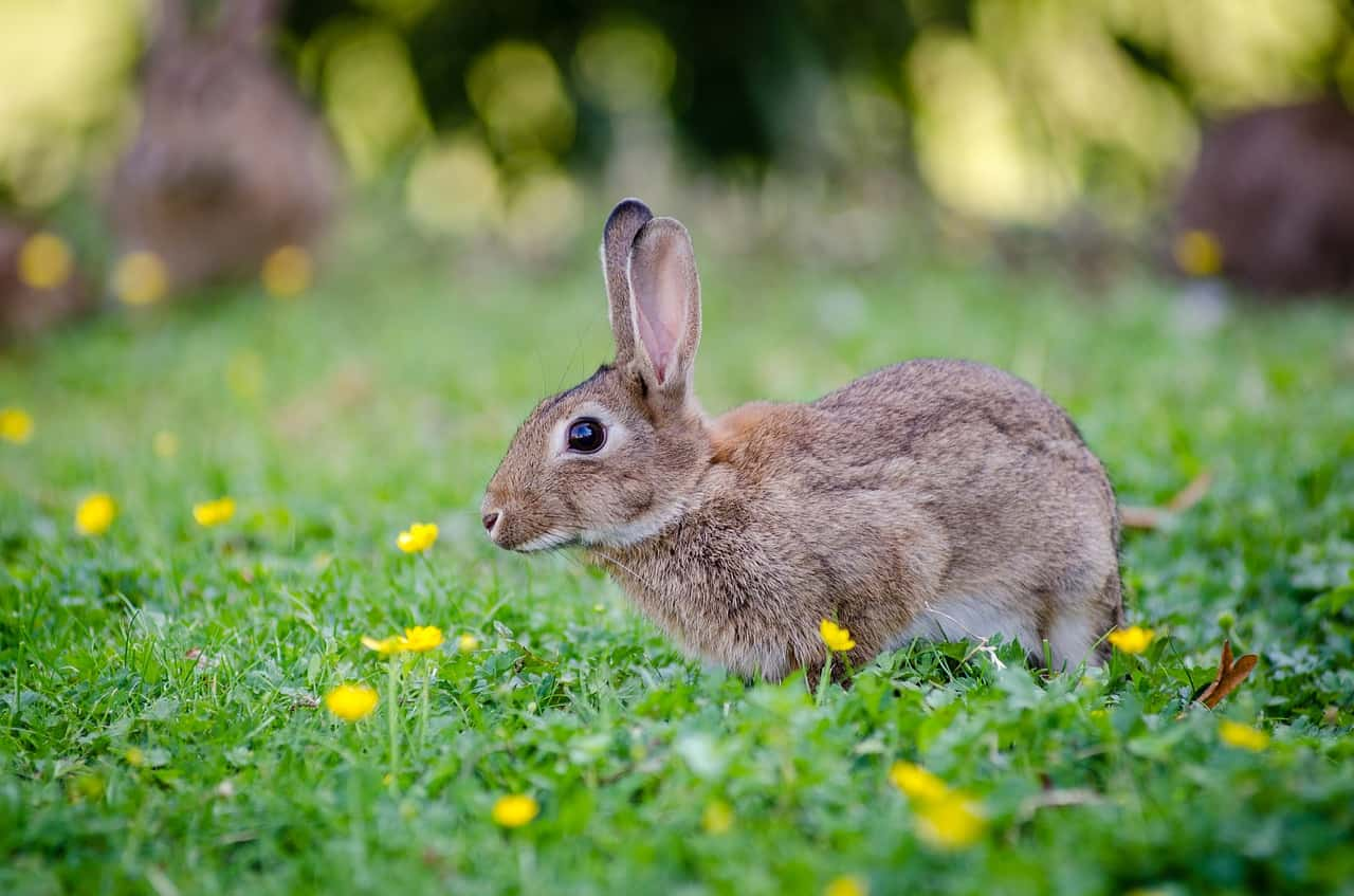Are Rabbits & Kangaroos Related? 10 Facts You Should Know