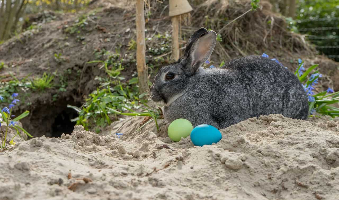 Rabbits & Sand: 17 Common Questions Answered!