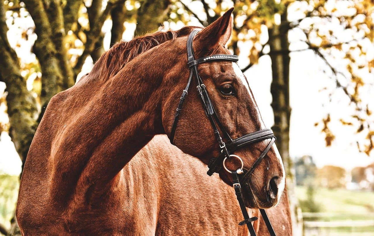 Are Horses Afraid of Snakes? No. Now Find Out Why