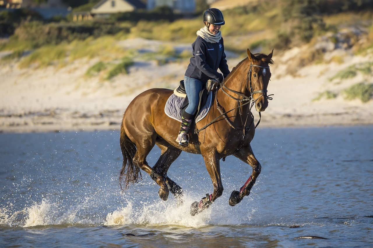 Are Horses Loyal? All You Need to Know!