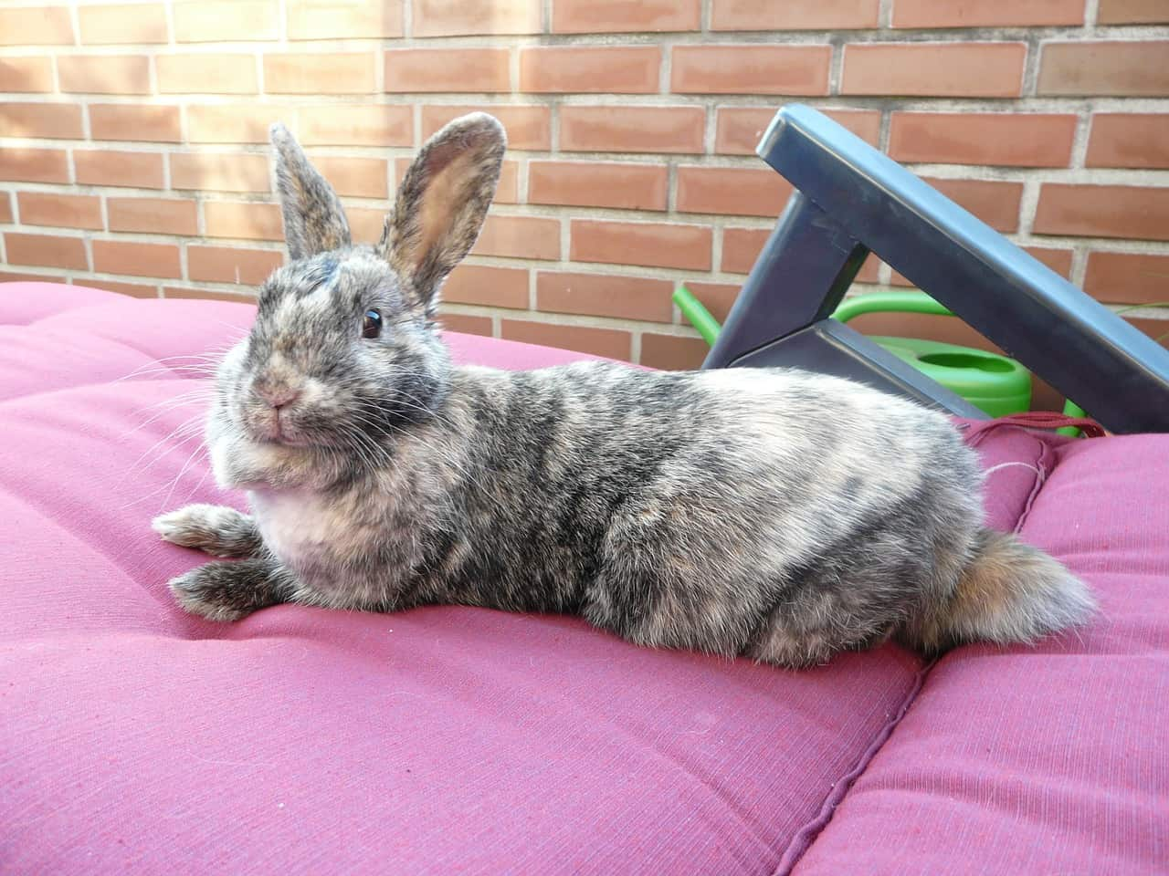 Are Rabbits Lazy? Here Are the Facts!
