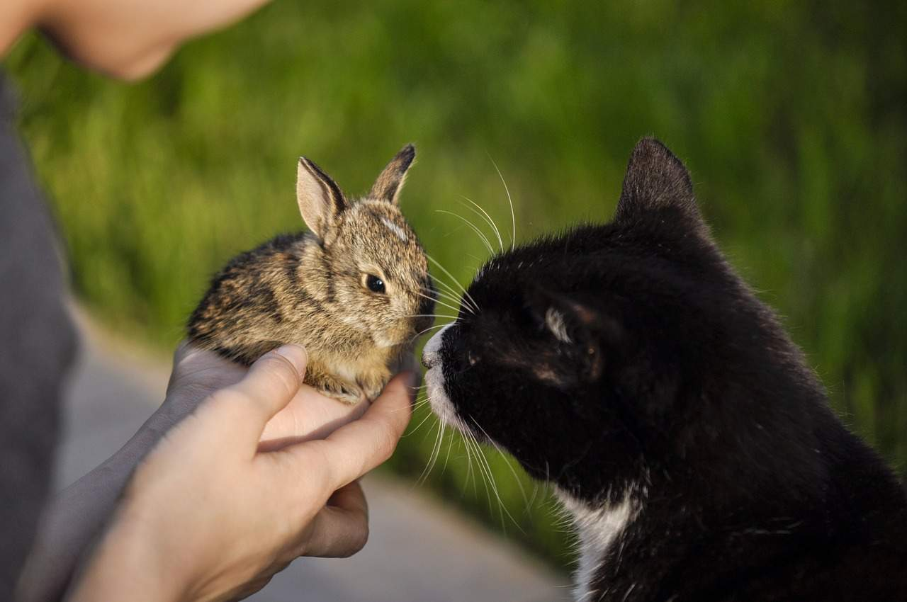 Are Rabbits Related to Cats? Here Are the Facts!