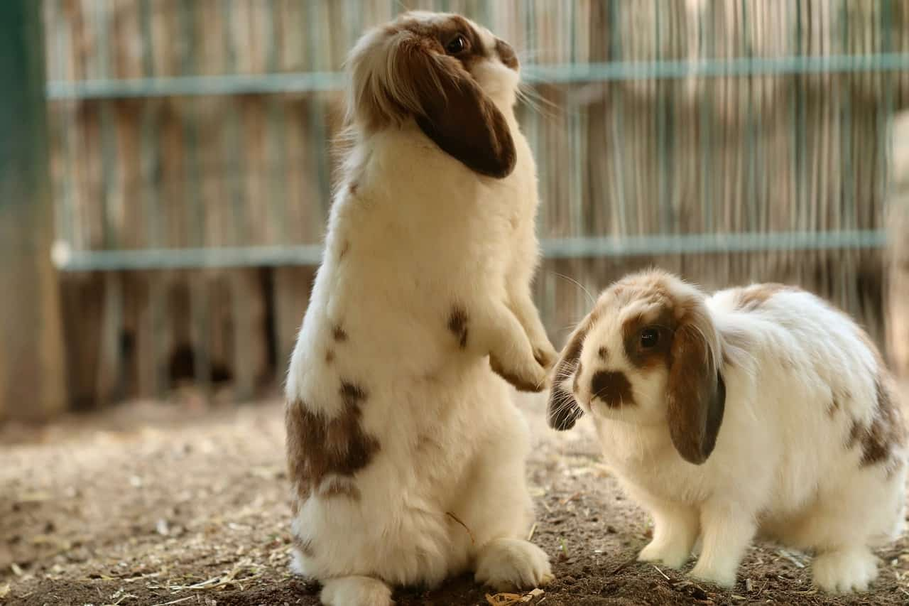 Are Rabbits Scared of Cats, Dogs, Mice, Spiders & Others