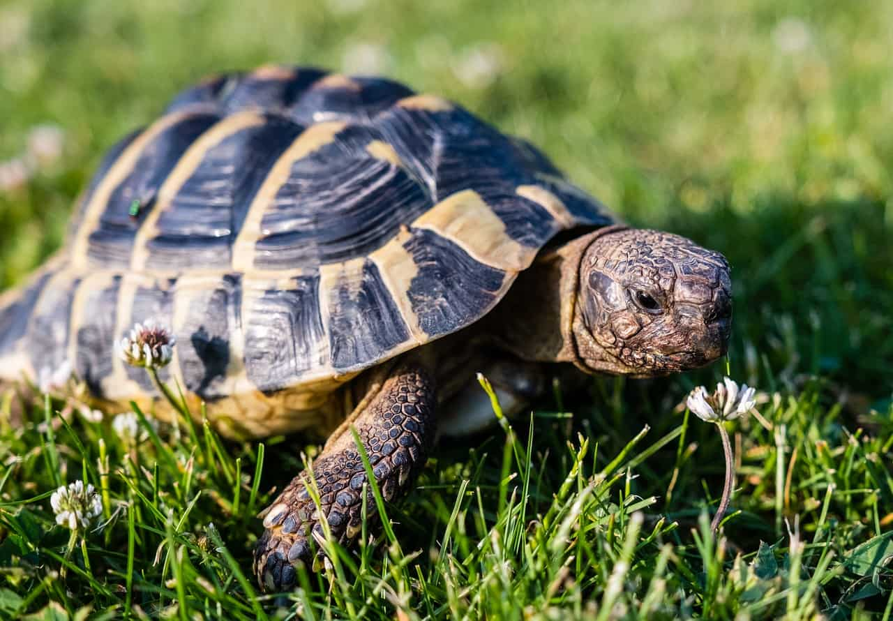 How to Tell If Your Tortoises is Sad or Depressed (& What to Do)