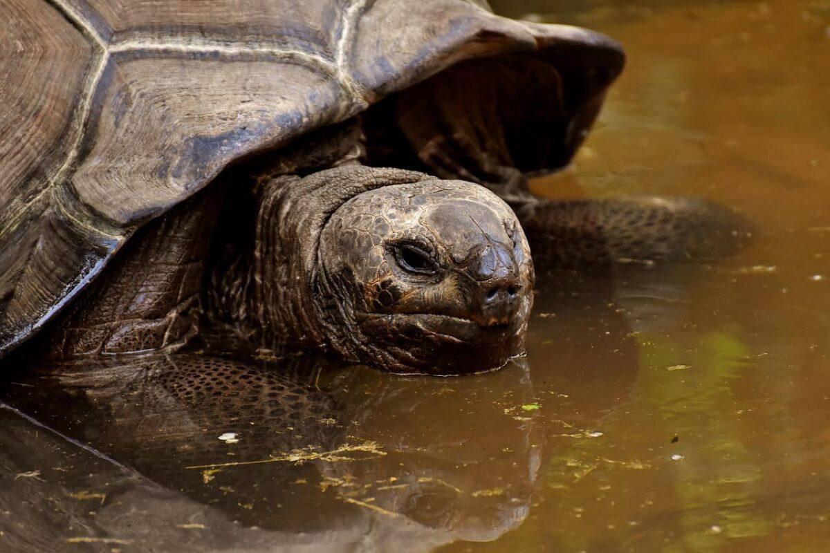 Why Are Tortoises Slow? (3 Main Reason Revealed)