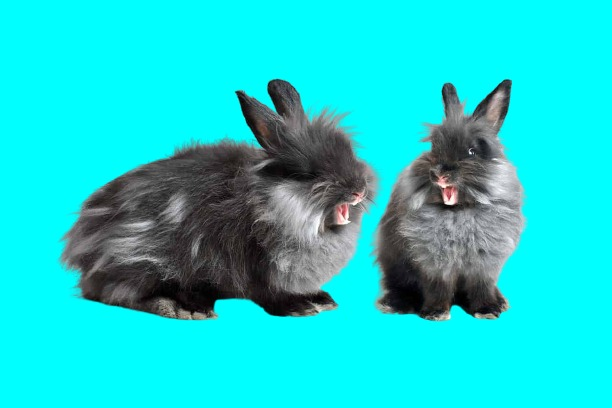 Do Rabbits Yawn? (Here's The Answers & Explanations)