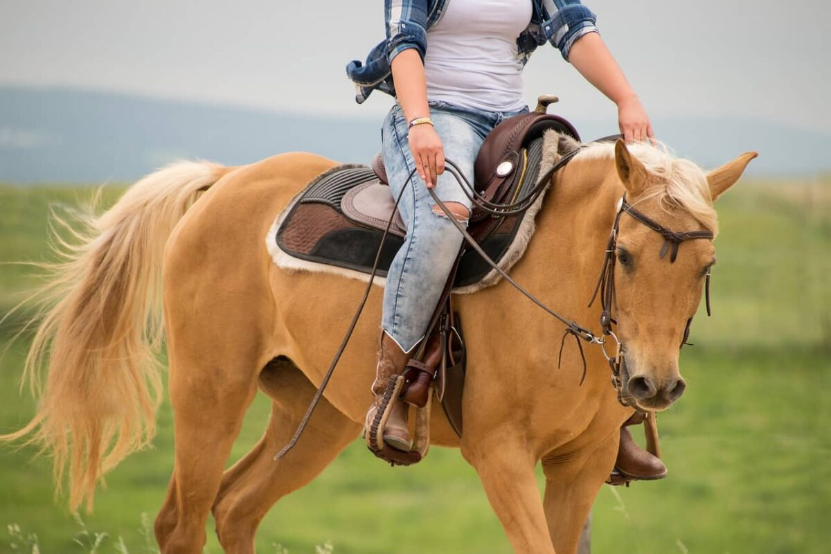 Palomino VS Pinto Horse: Differences & Questions Answered