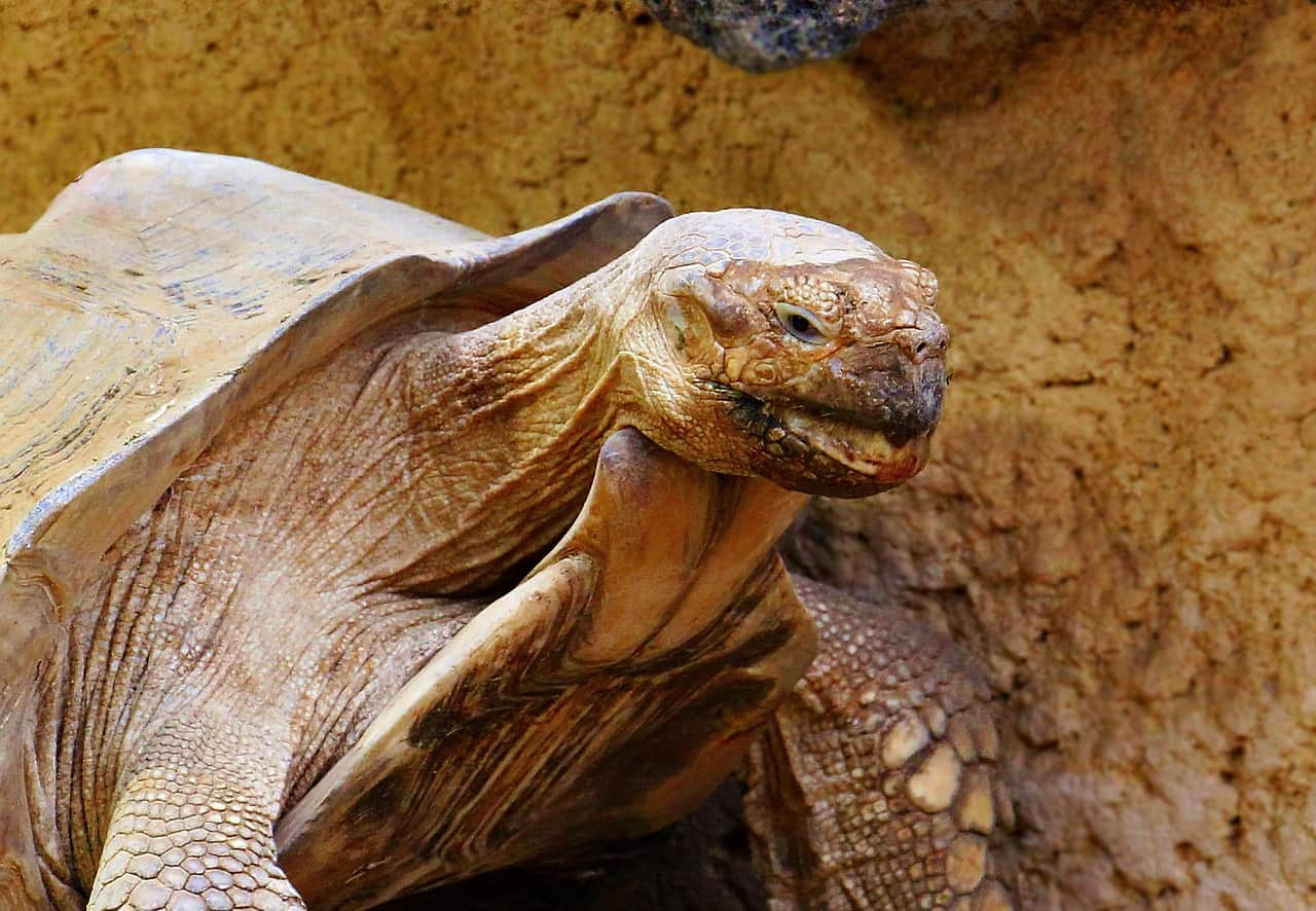Do Tortoises Get Bored & Lonely? (& How to Fix It)