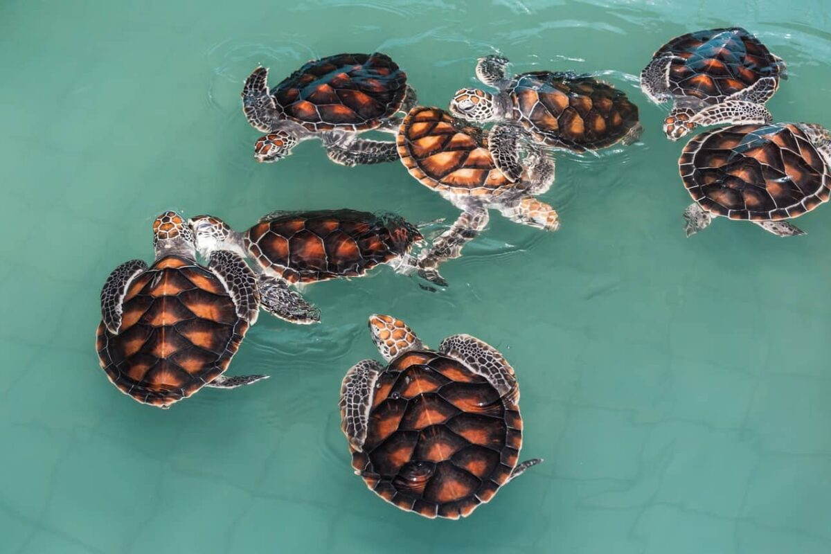 Are My Turtles Fighting or Playing? (& How to Stop It)
