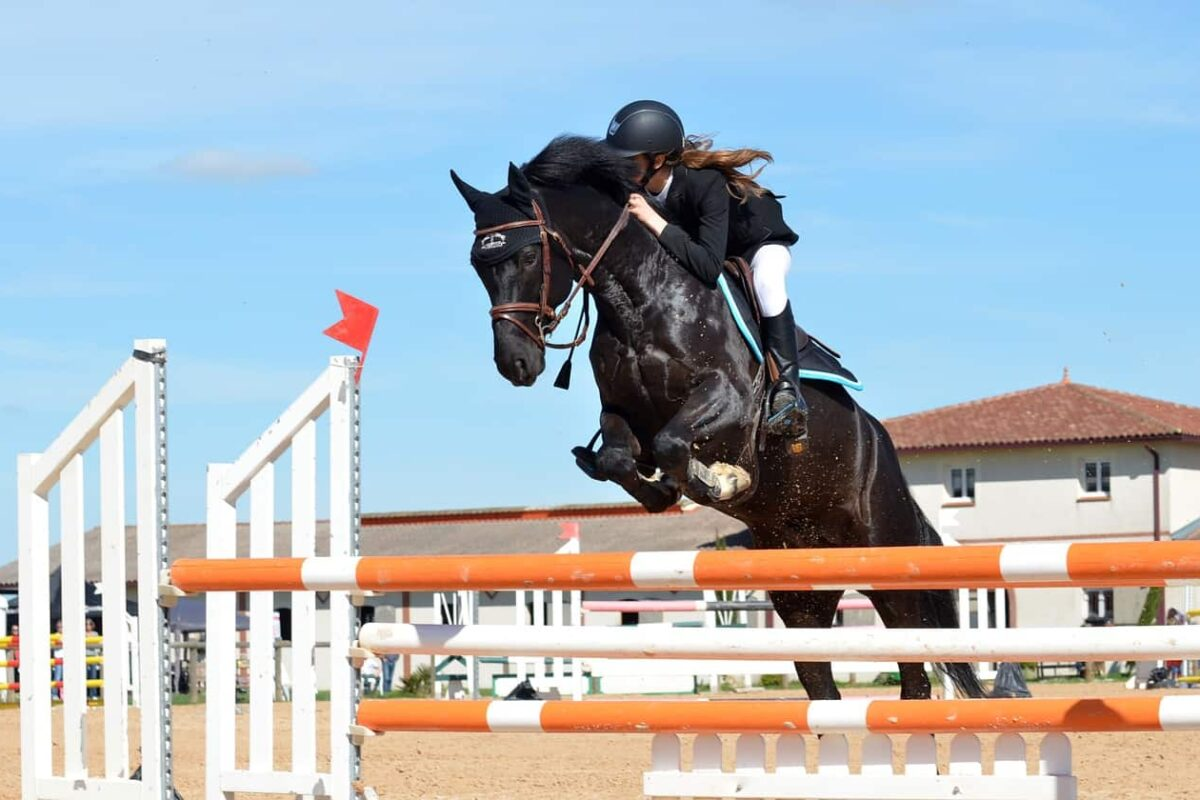 Saddle Pad: 9 Things You Should Know (Read This First!)