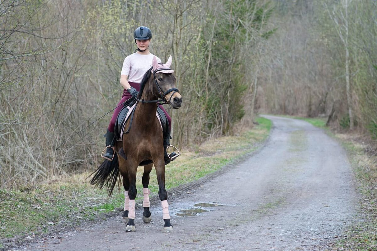 Are Wintec Saddles Good? How Good? (Pro & Cons)