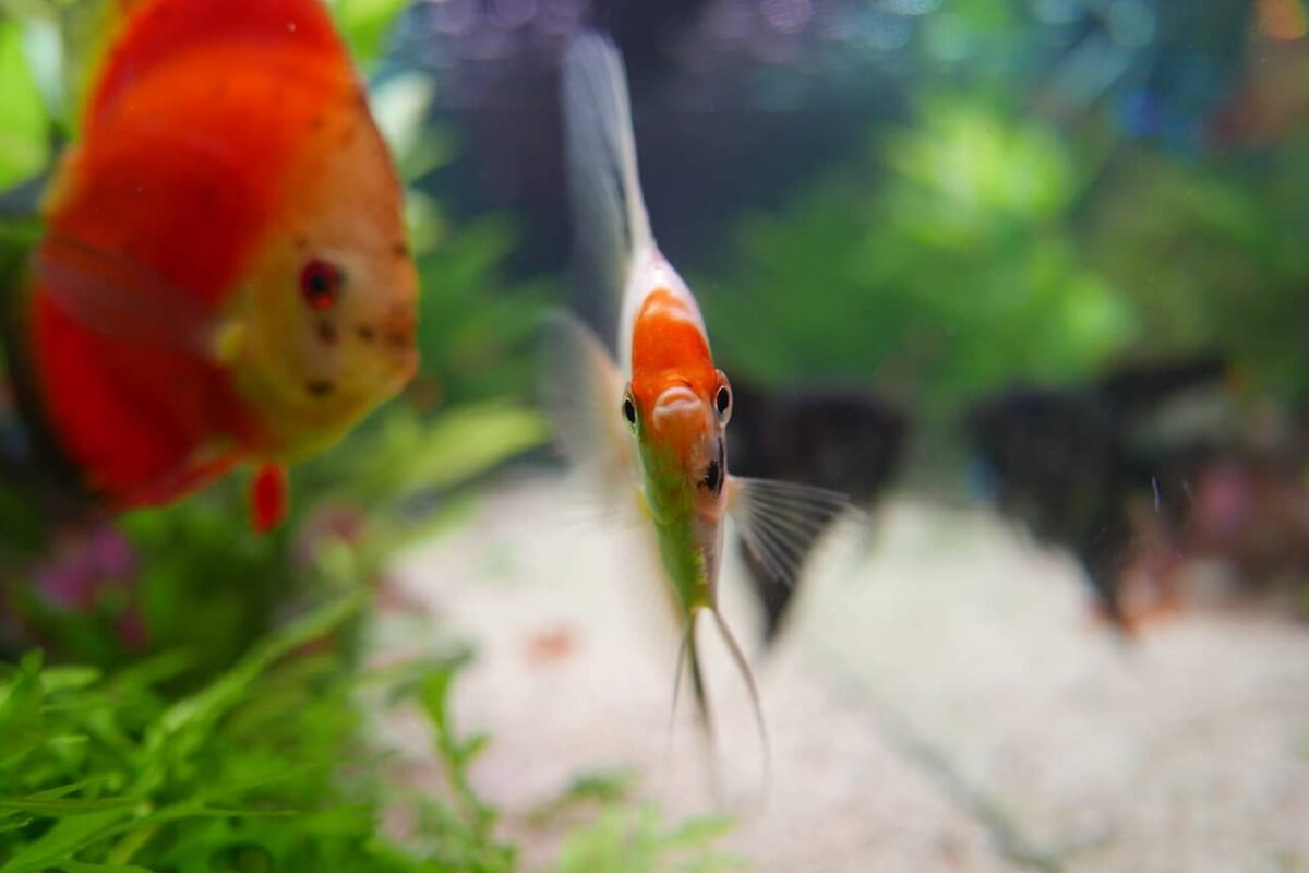 biOrb Fish Tanks, Filters & Heaters: 17 Things You Should Know